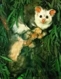 Greater gliding possum